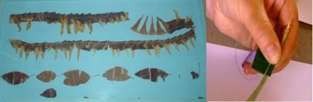 Replicating an Ancient Egyptian garland copyright Sally McAleely